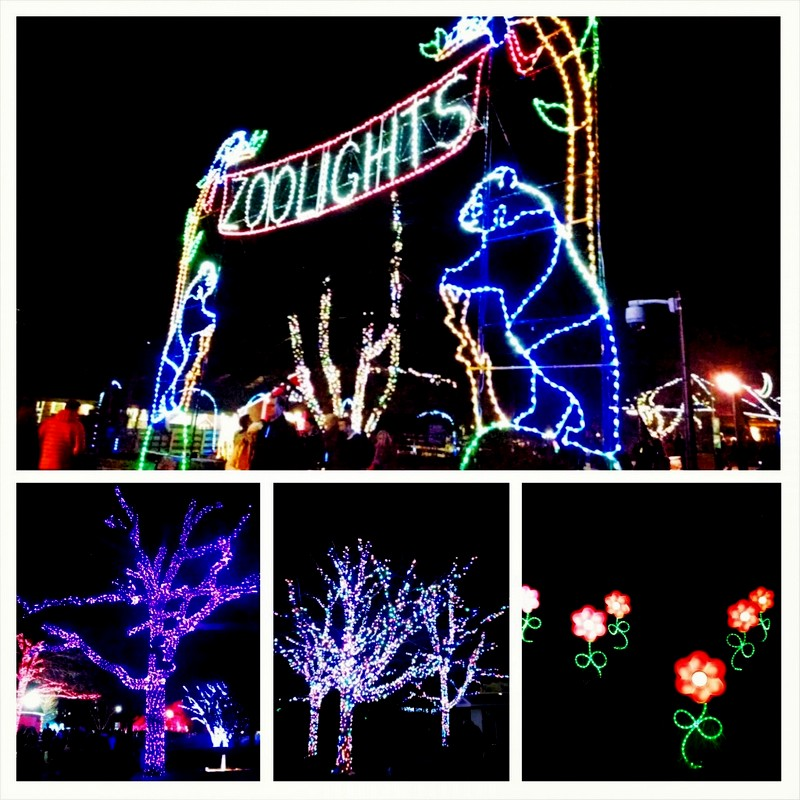 ZOOLIGHTS #latergram