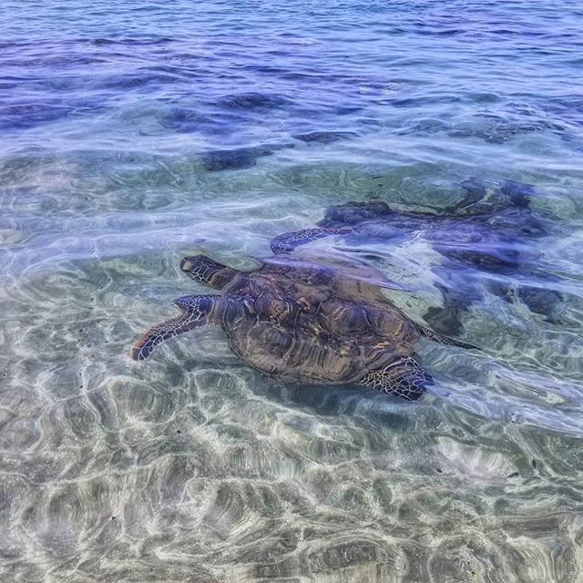 Why hello there, #🐢. #Maui